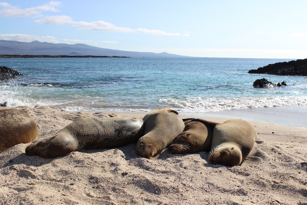Sea Lions lounging in the Galapagos