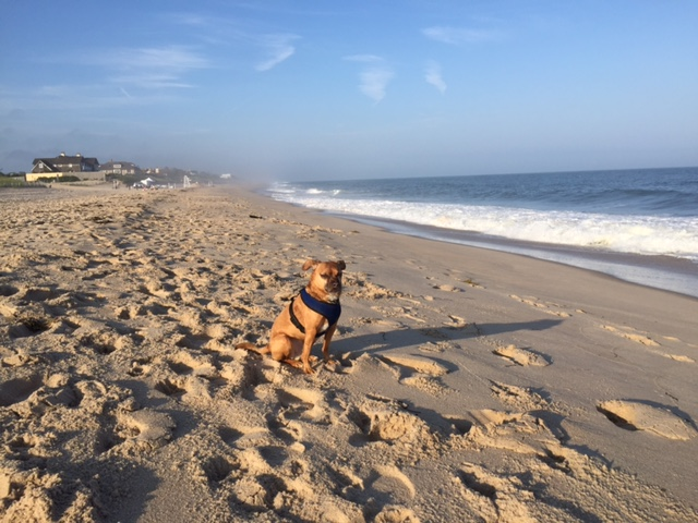 No place makes me feel like this place does - East Hampton, NY