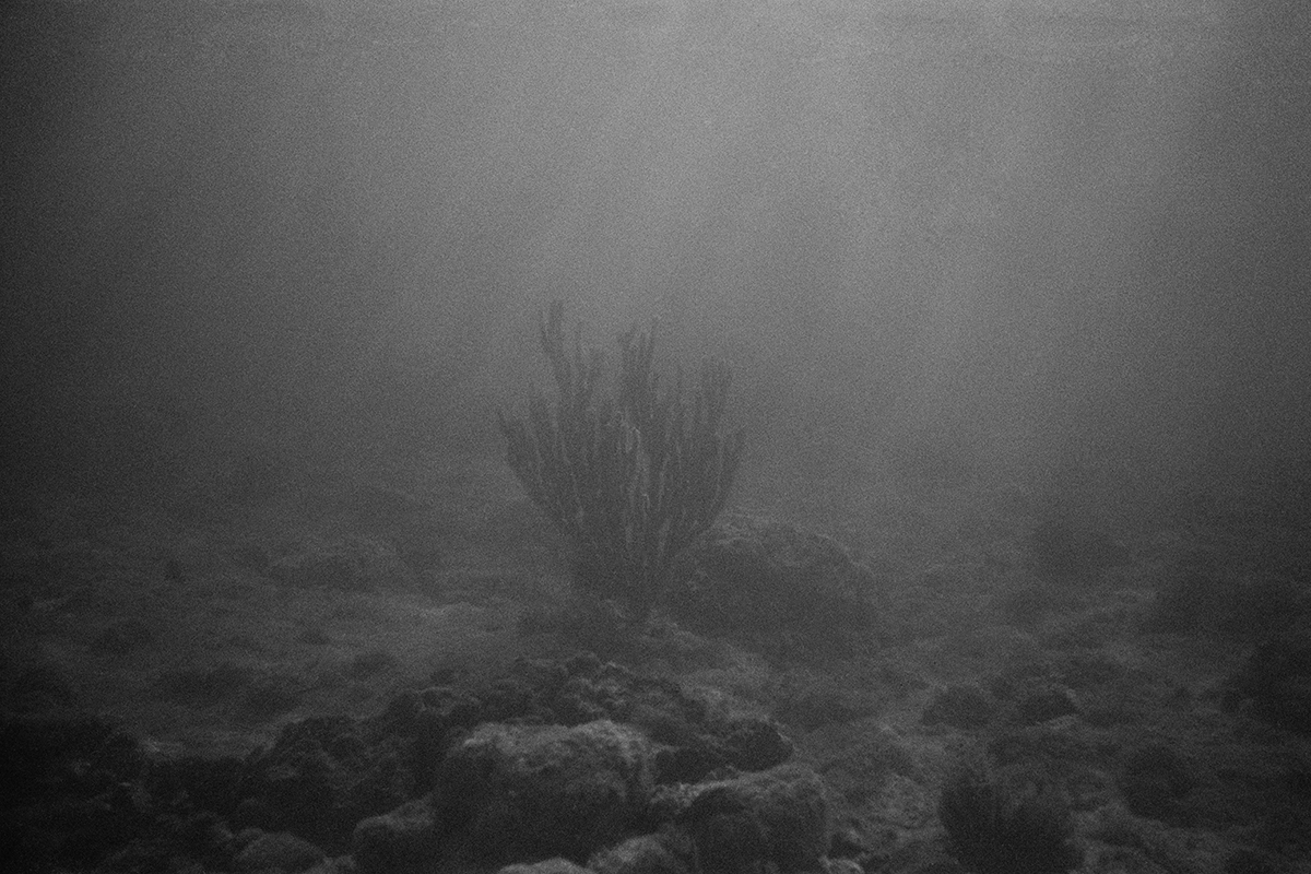 Seabed #5