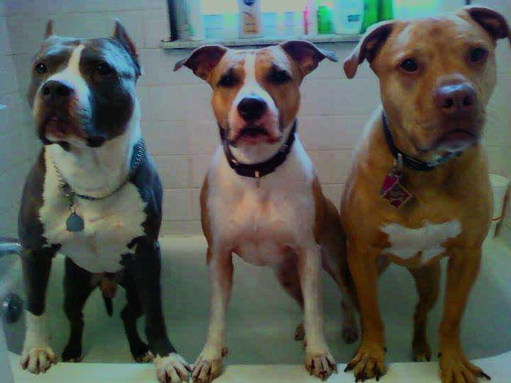 Rub a Dub Dub! Three Pits in a Tub!