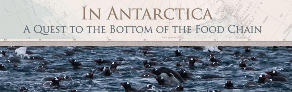 GT_web_feature_antarctica.jpg