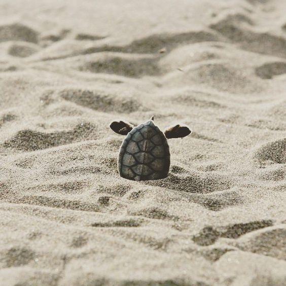 Wanderwood - coaching - turtle 1.jpg