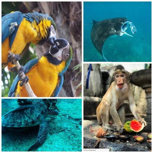 Animals Collage (1).jpg
