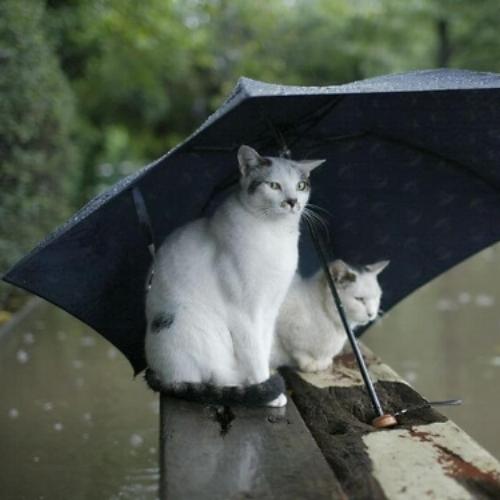 cat umbrella.jpg
