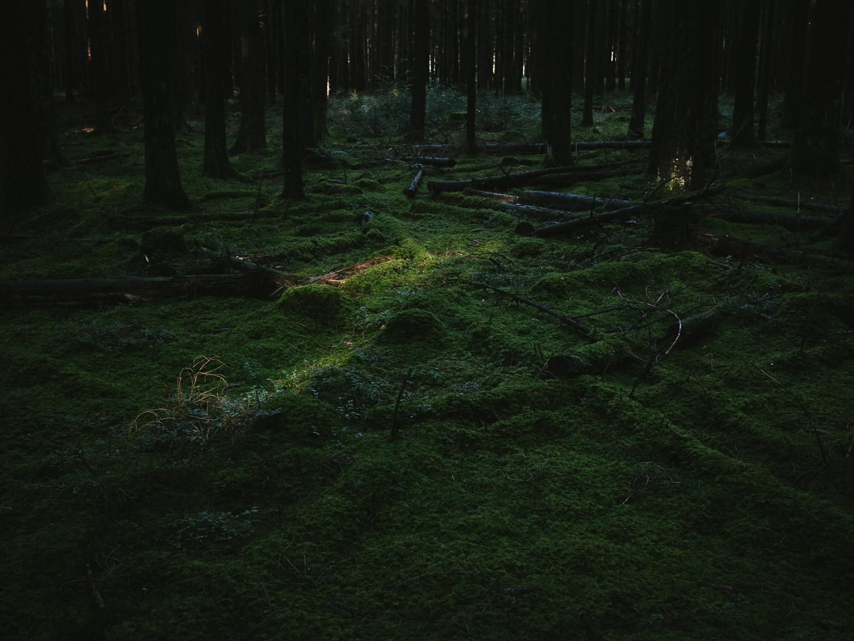 WISFH-ghostpressure-03.jpg