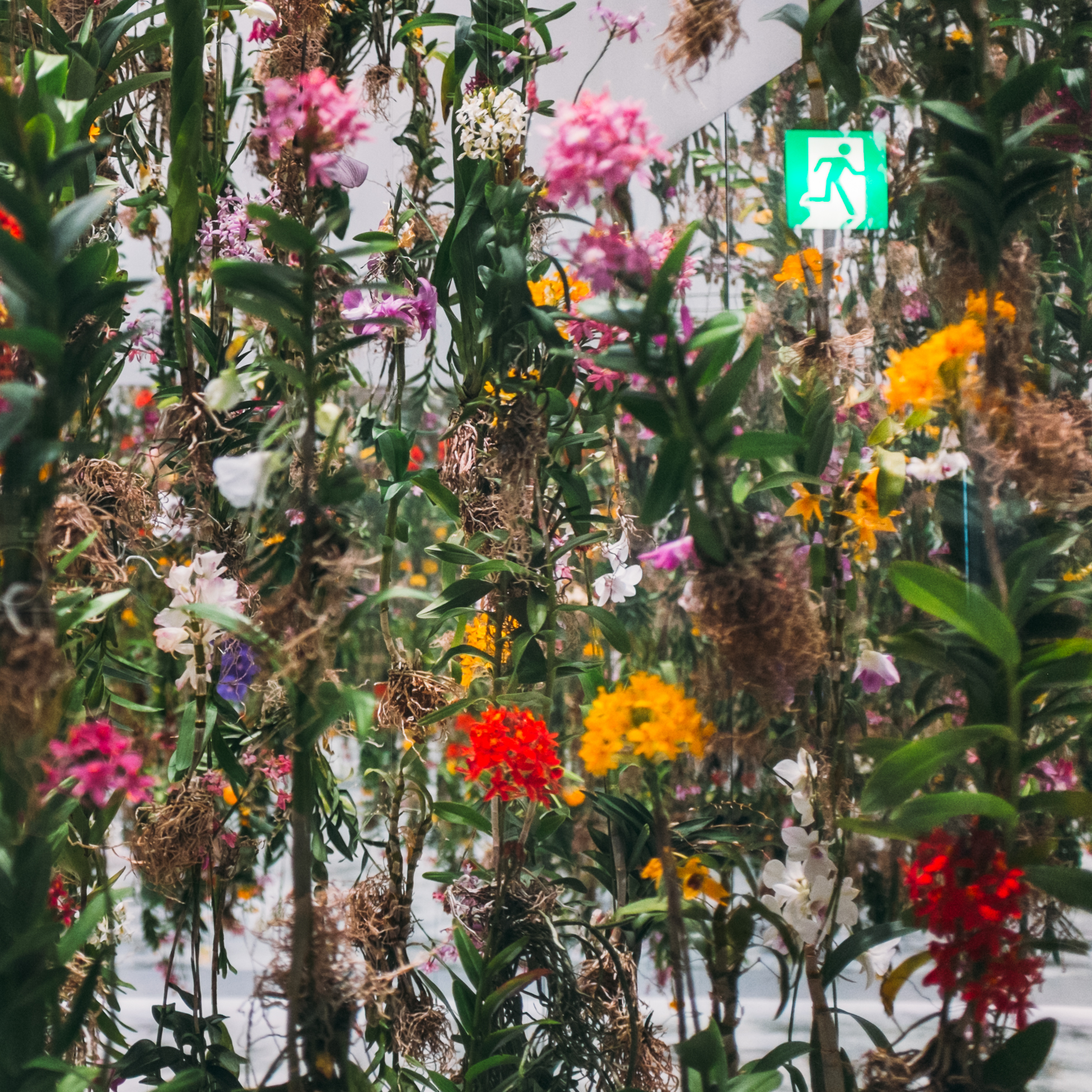 Orchids, Tokyo, 2015