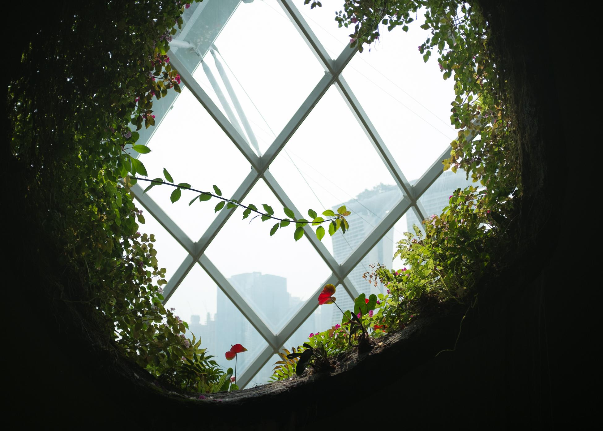 Window Vine, Singapore, 2015