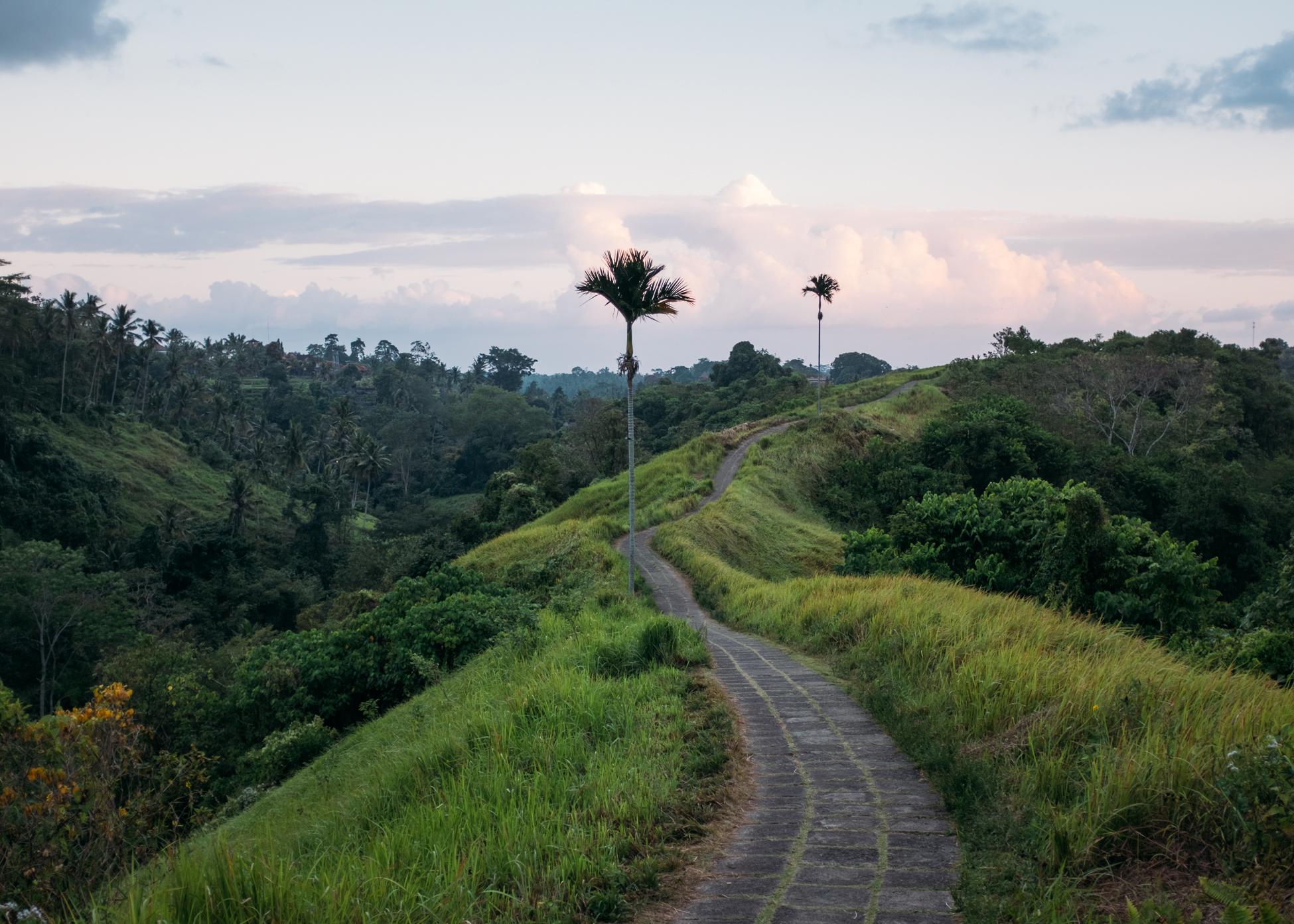 Winding Path, Indonesia, 2015