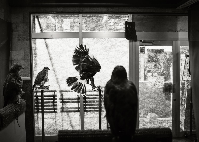 OWL CAFE, JAPAN