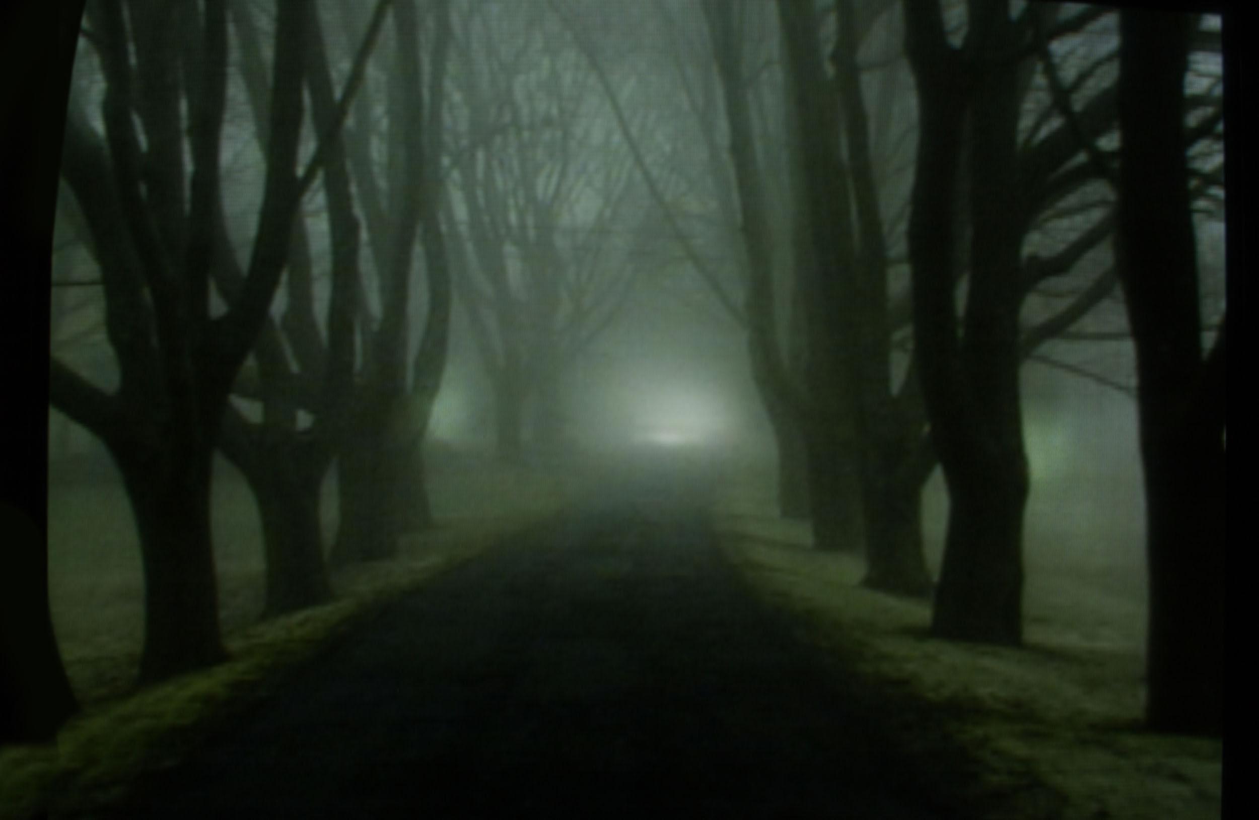 13_trees.jpg