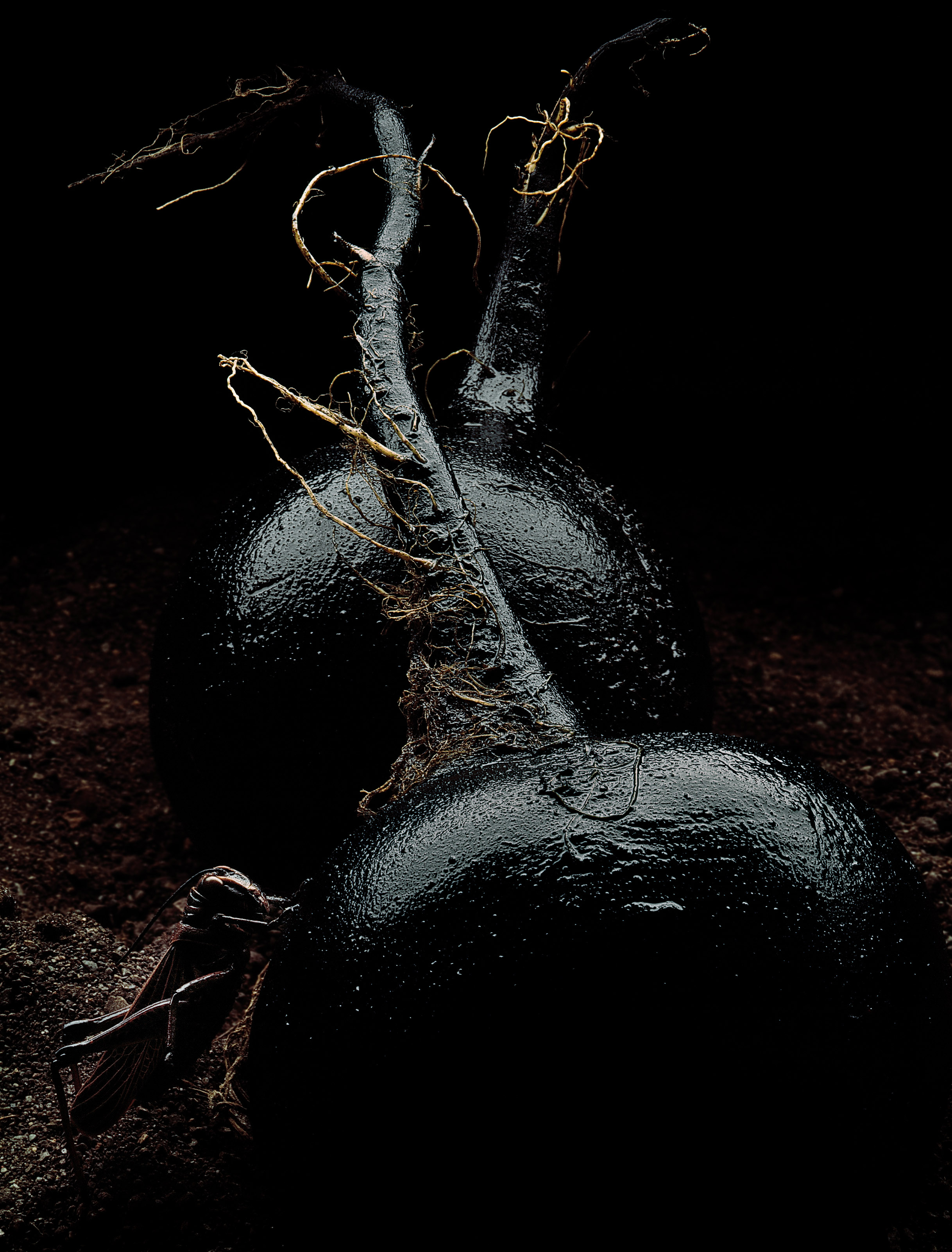 Black Beets.jpg