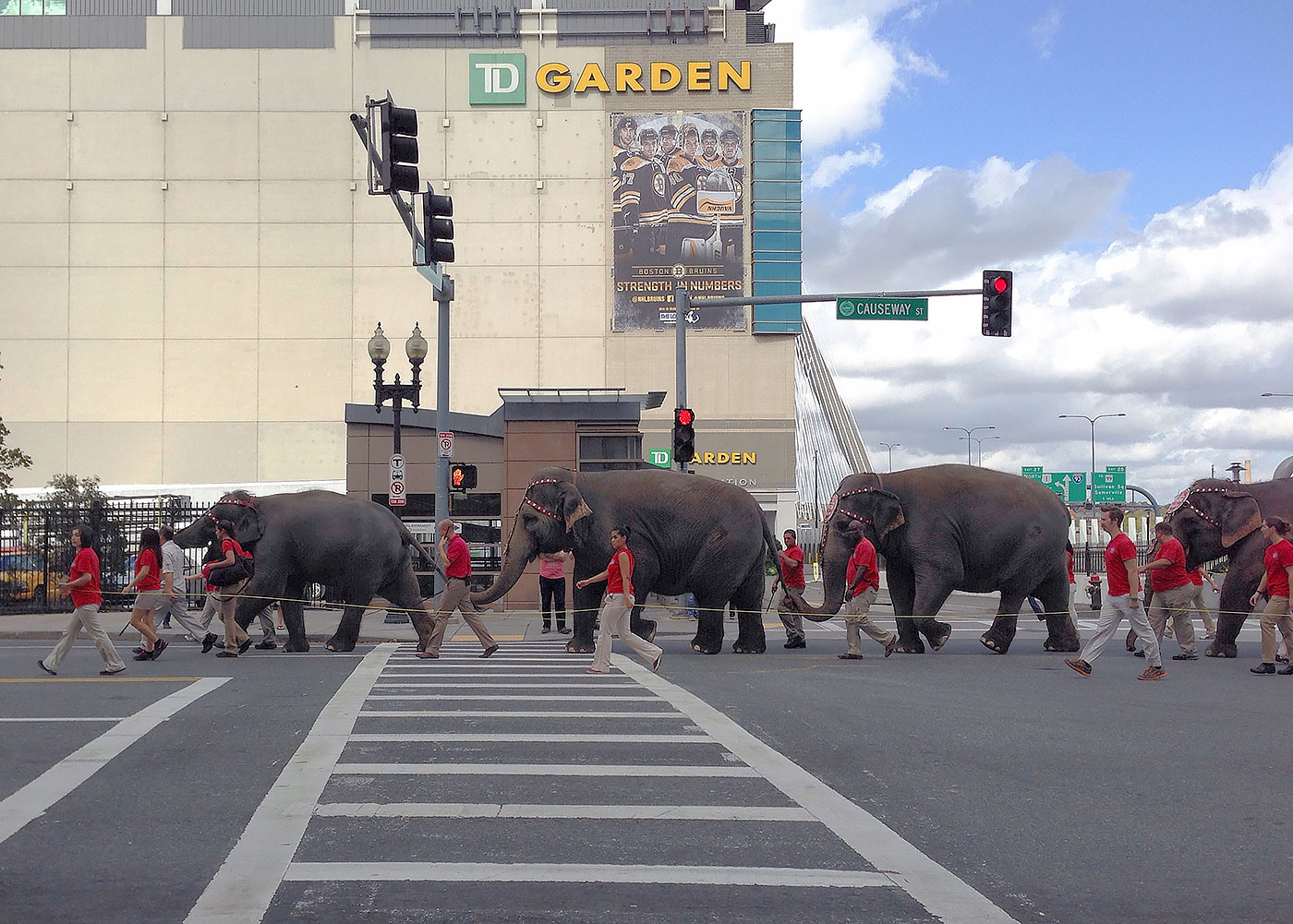 Elephants parading down Causeway Street in Boston - October 15, 2014