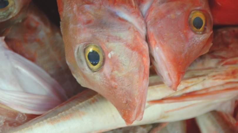 Fish at Plymouth Fisheries