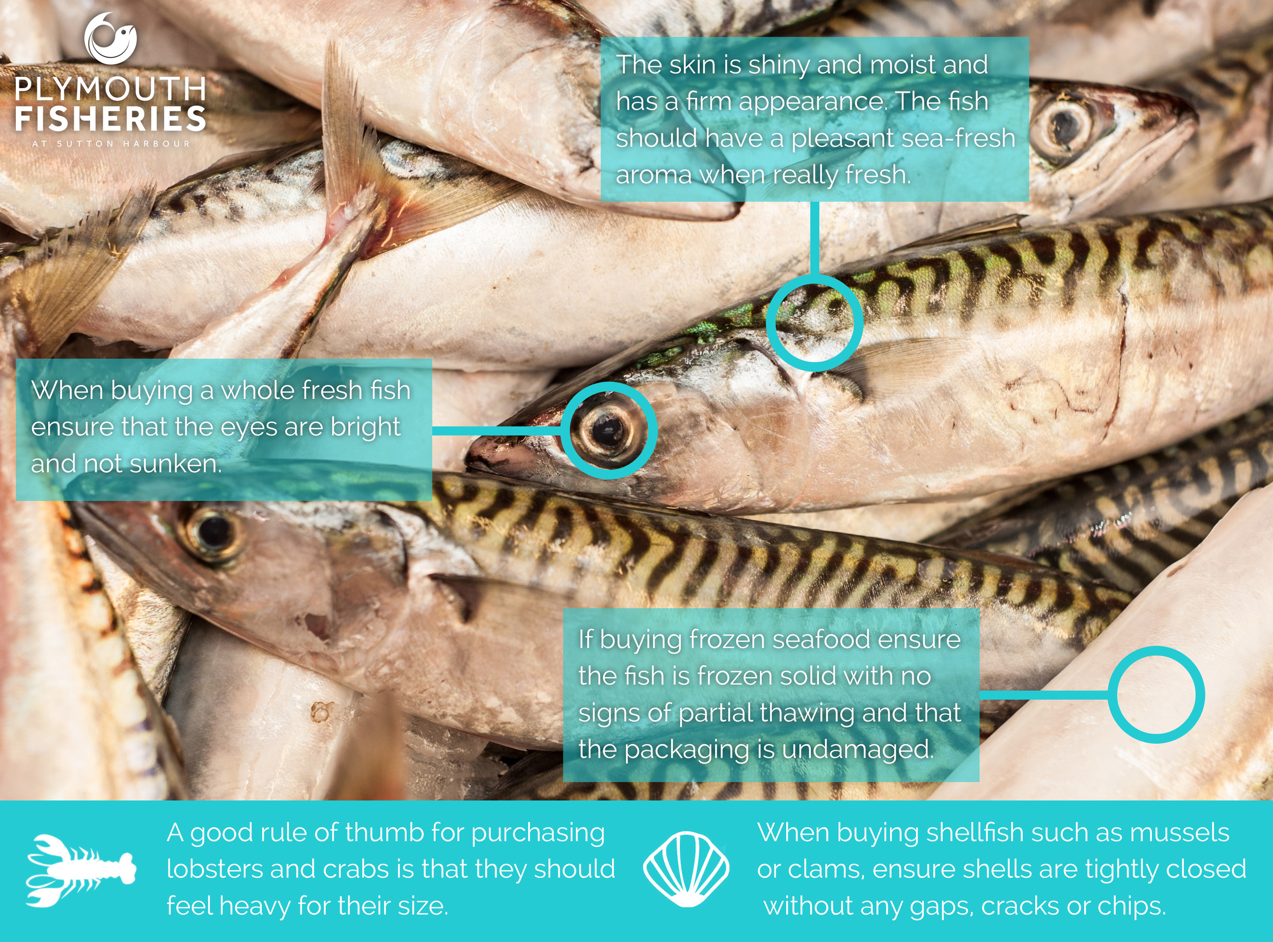 A guide to fresh fish at Plymouth Fisheries