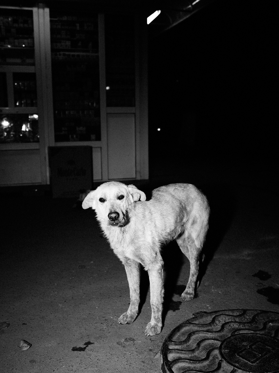 CN_Street_Dogs_006.jpg