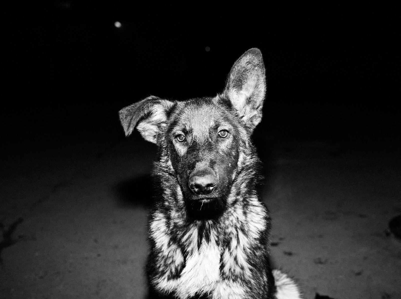 CN_Street_Dogs_007.jpg