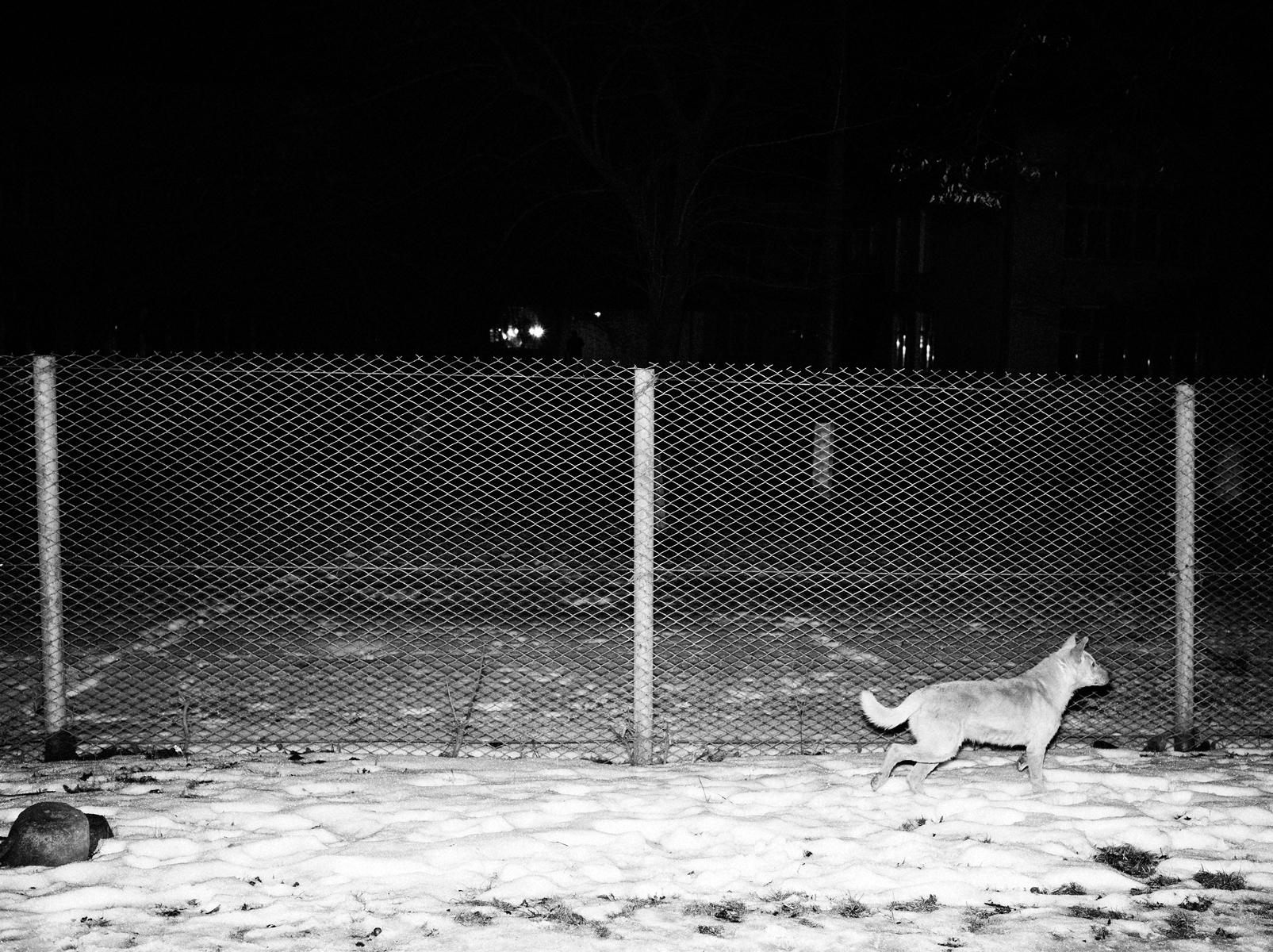 CN_Street_Dogs_015.jpg
