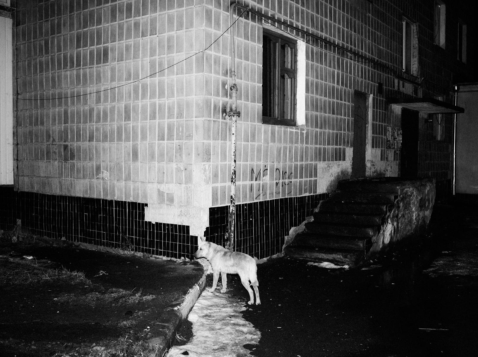 CN_Street_Dogs_016.jpg