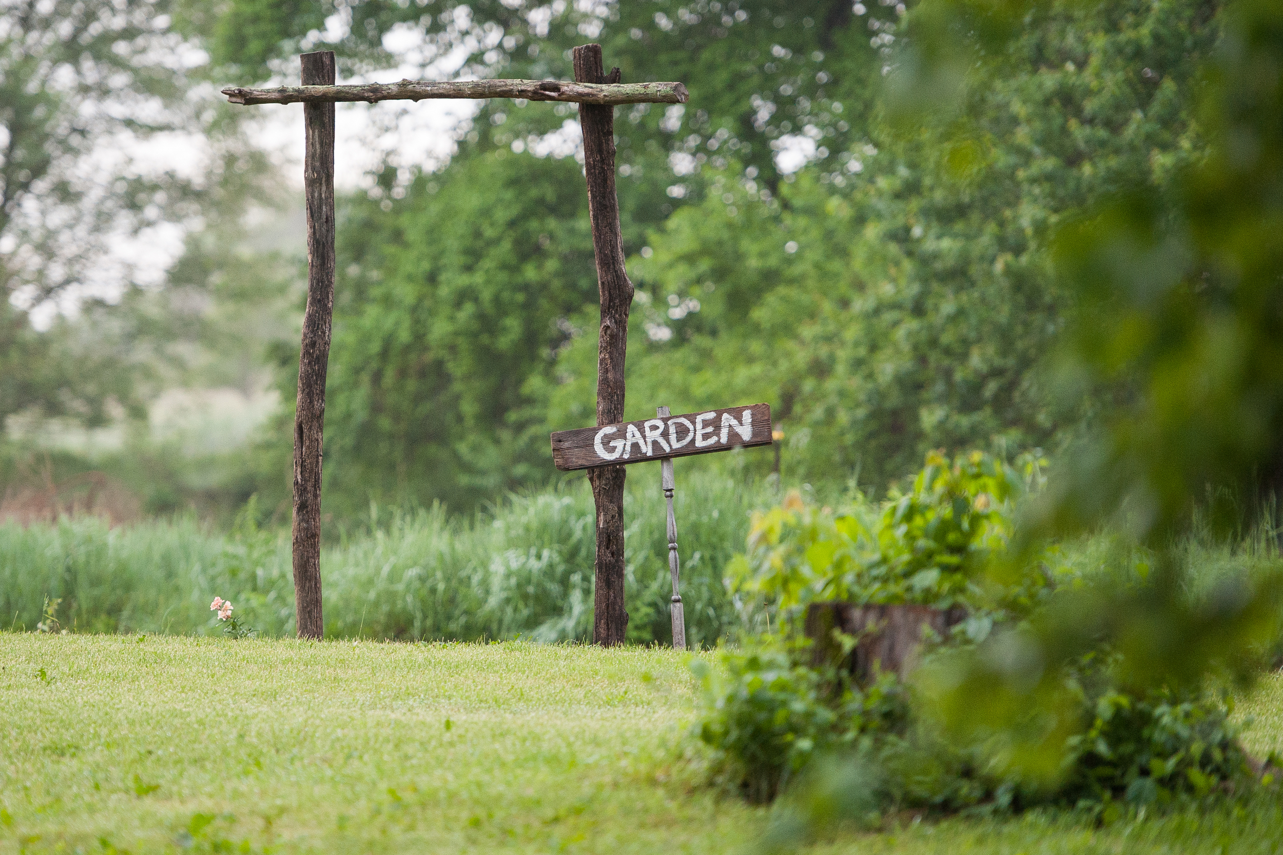 the Buckwalter garden 2015 edition