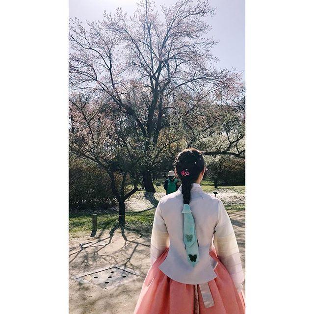 Pink Blossom.  #korea #asia #seoul #travel #vscophile #vscocam #streetphotography #mobilephotography #mpnselects #fotomobile #fotoguerilla #dazedandexposed #streettogs #iphonography #shotoniphone7plus #iphone7plus #在路上 #手机照片