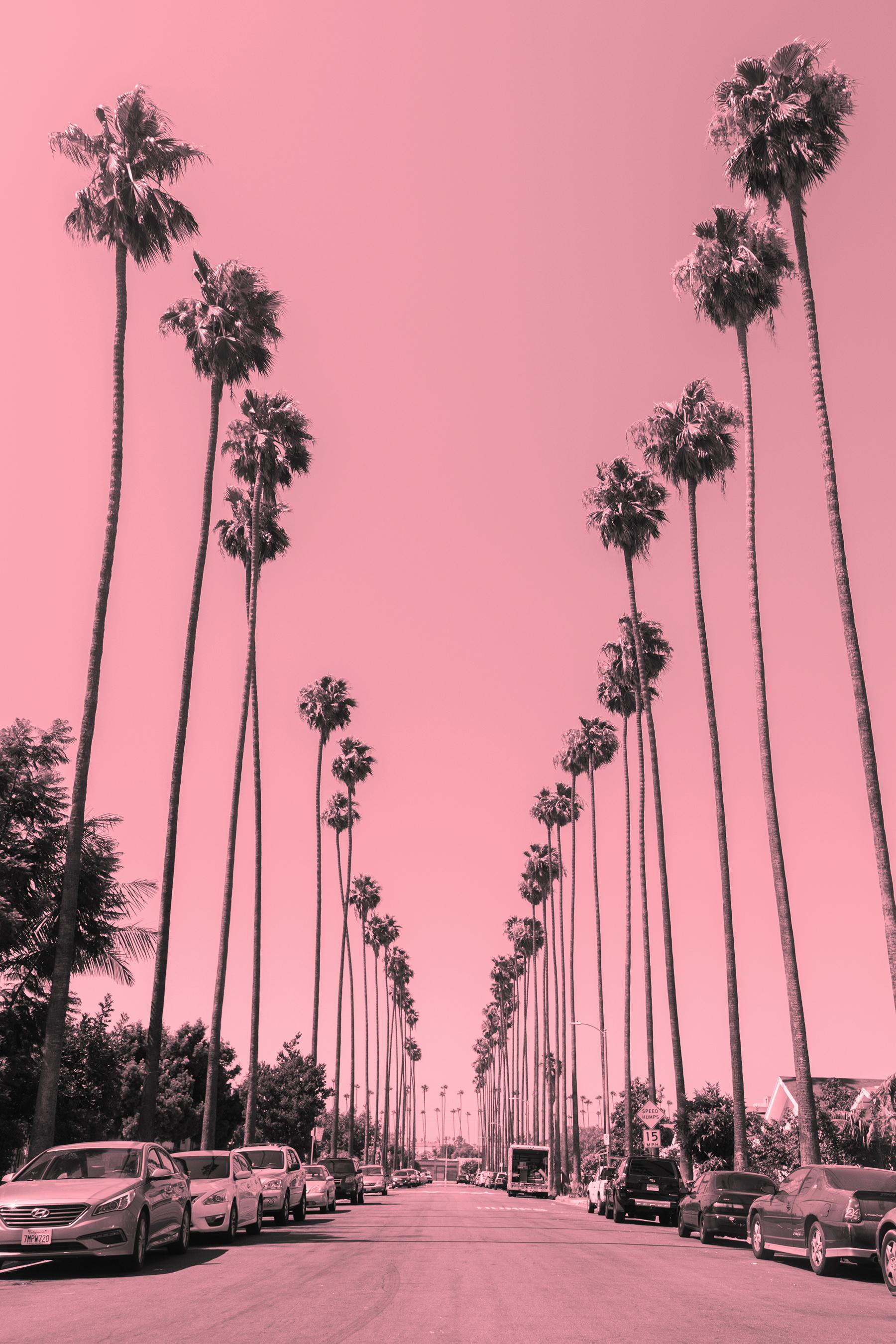 palm trees 1A smaller.jpg