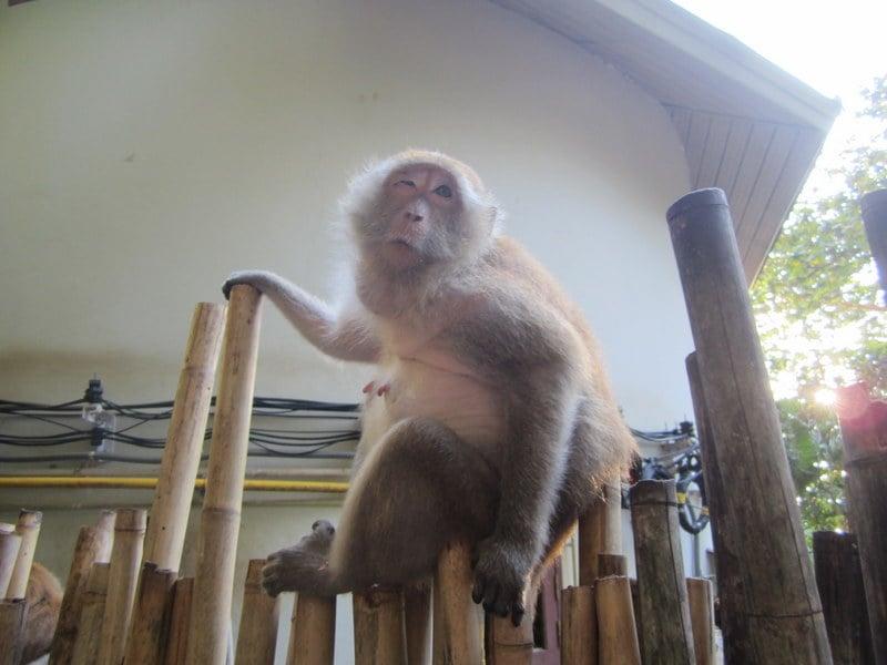 Karl Dall als Affe! (mit extra langen Nippeln)