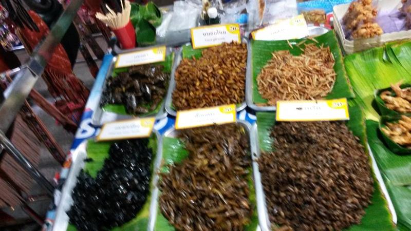 lecker Insekten (leider etwas unscharf)