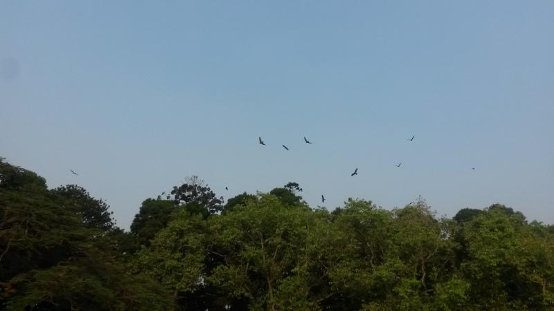 Raubvögel! Habicht-Adler-irgendwasse (jemand mit Vogelkenntnissen hätte die sicherlich kompetent identifizieren können)
