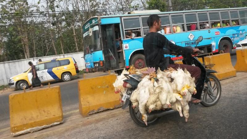 Viehtransport...da freut man sich mal wieder, Vegetarier zu sein!