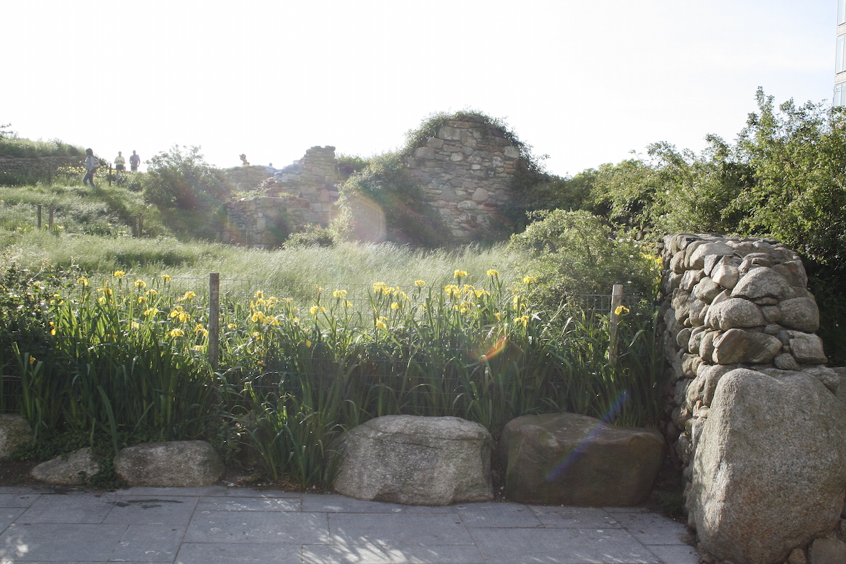 62_species_of_plants_on_the_sloping_hill_of_the_Irish_Hunger_Memorial..JPG