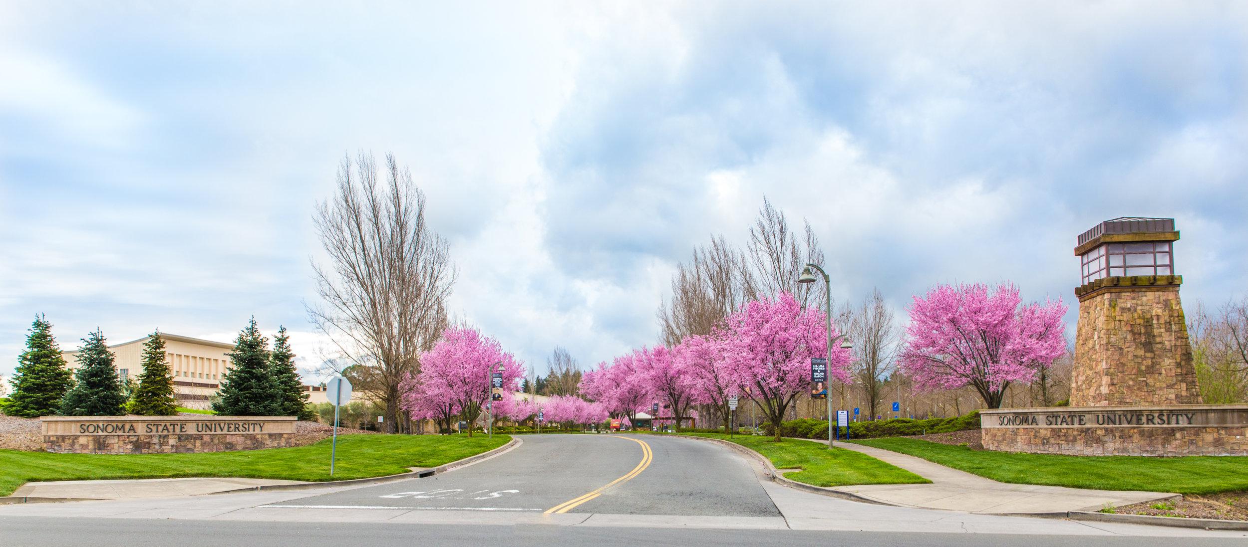 Sonoma State University ranks high in annual Princeton