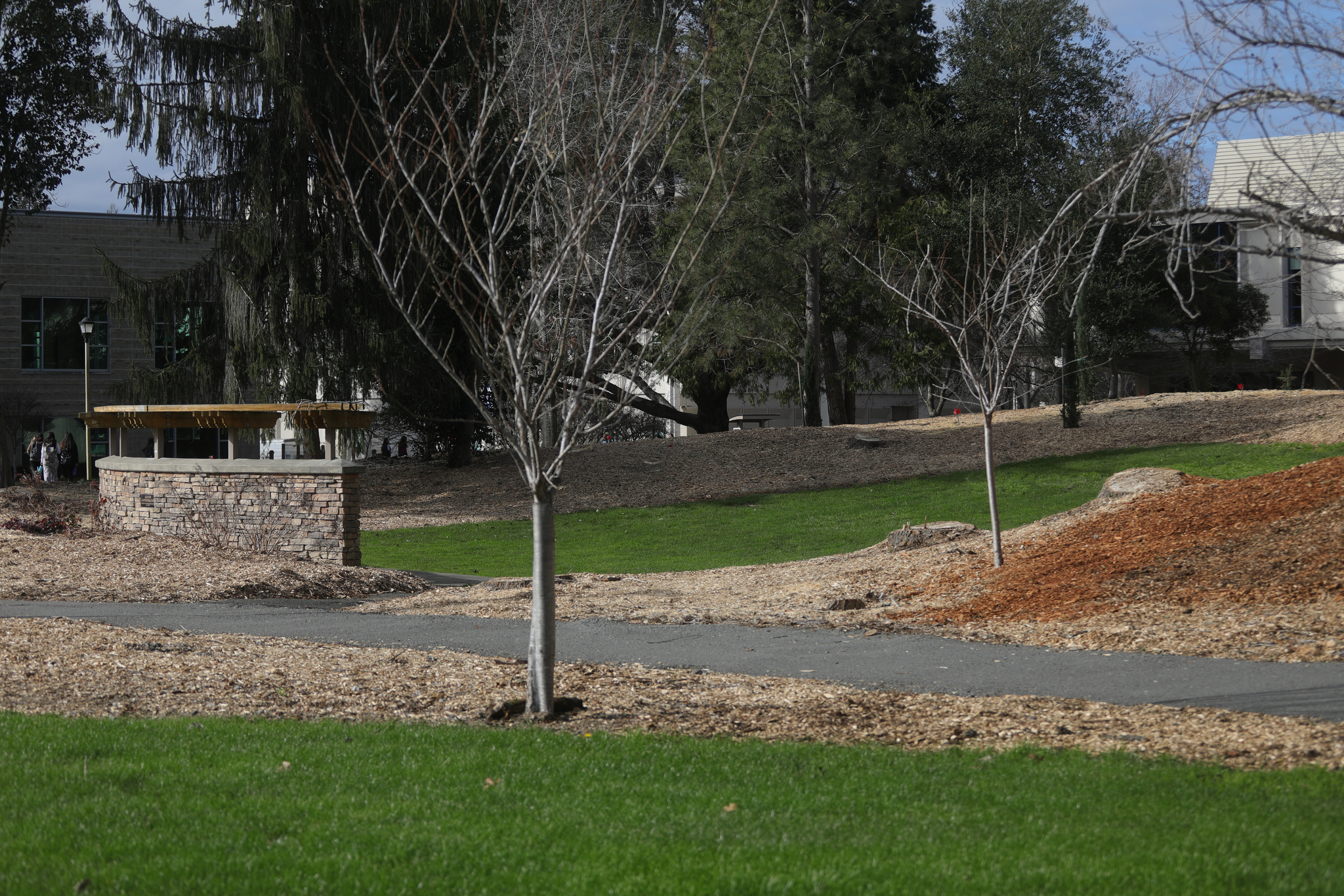The amphitheater between Ives Hall and Salazar Hall had several trees removed, although more were planted in their place.