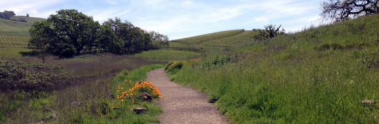 COURTESY // Sonoma County Regional Parks   One of Crane Creek Regional Park's many trails.