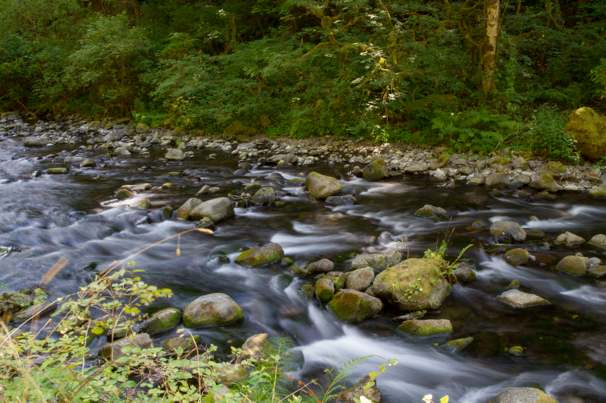 Oregon_2015-0244.jpg