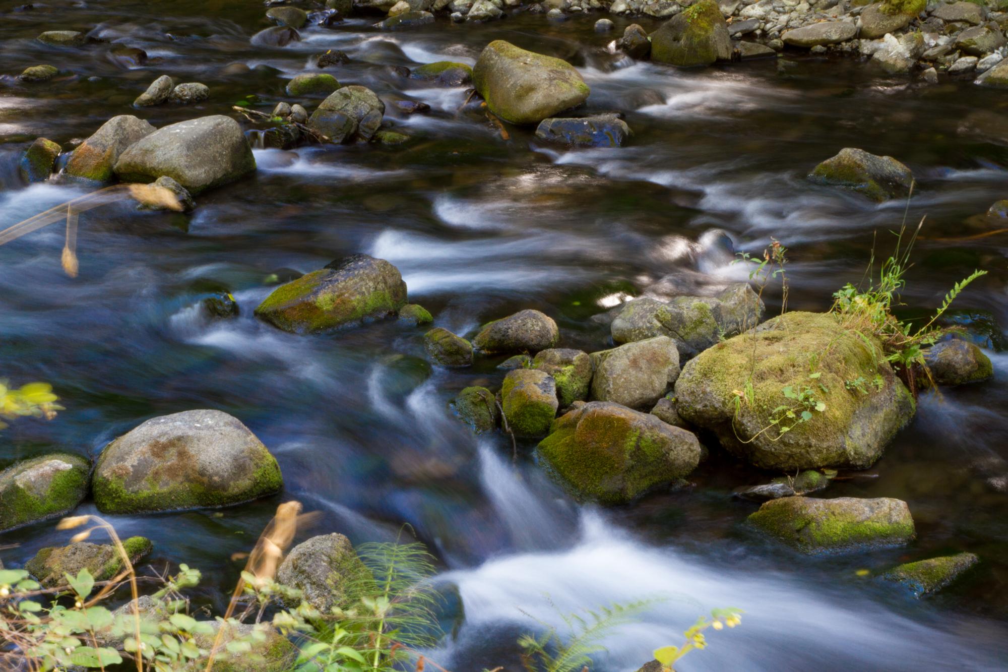 Oregon_2015-0246-2.jpg