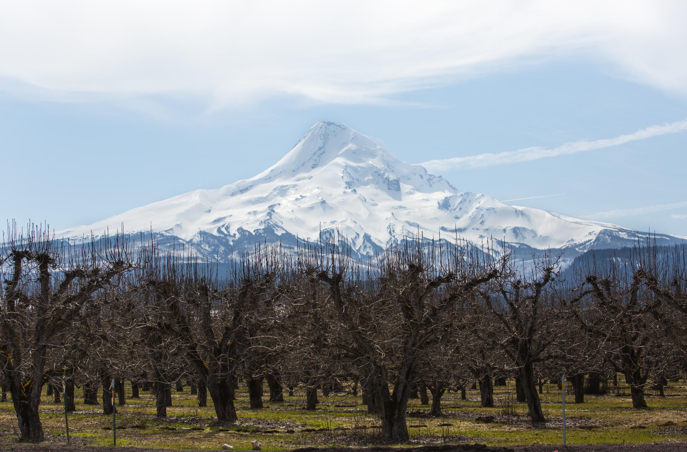 Oregon-4434.jpg