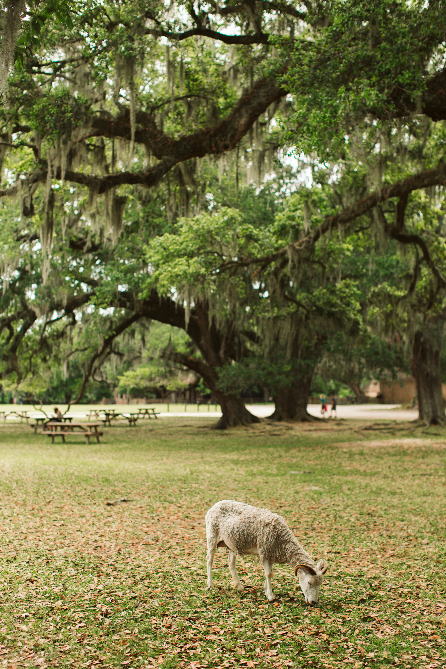 Middleton Place Charleston SC wedding-1686.jpg