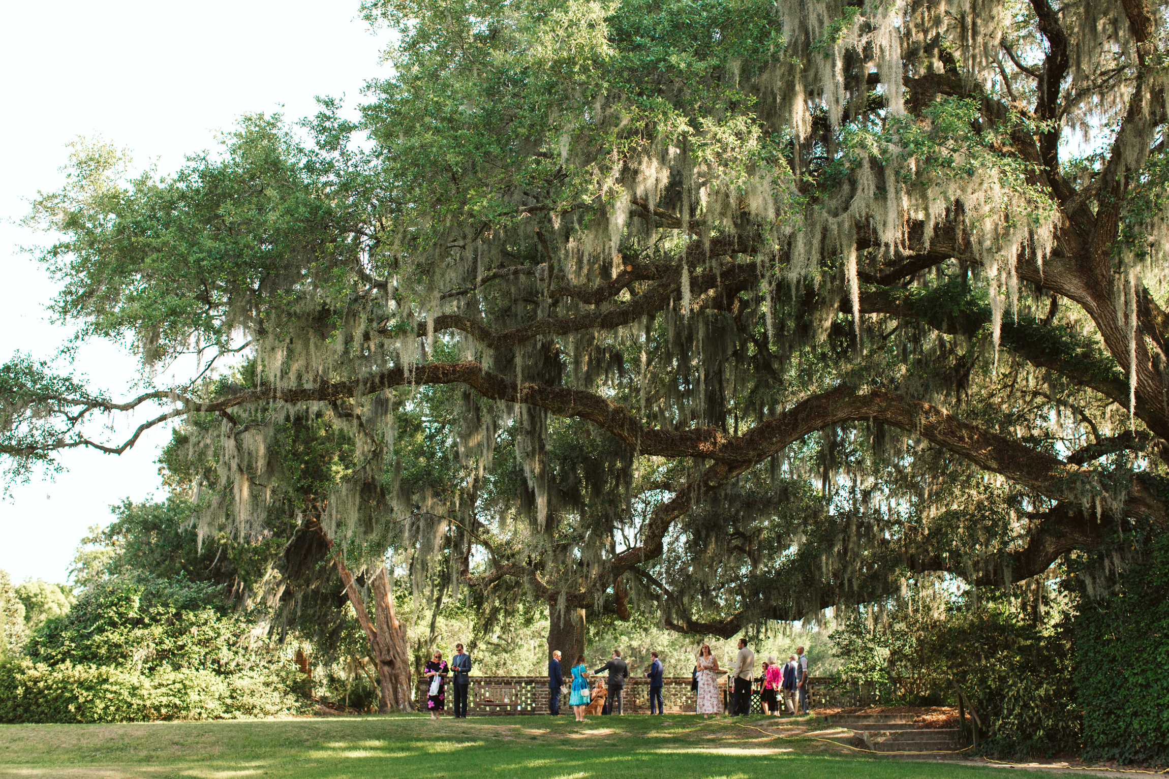 Middleton Place Charleston SC wedding-3817.jpg