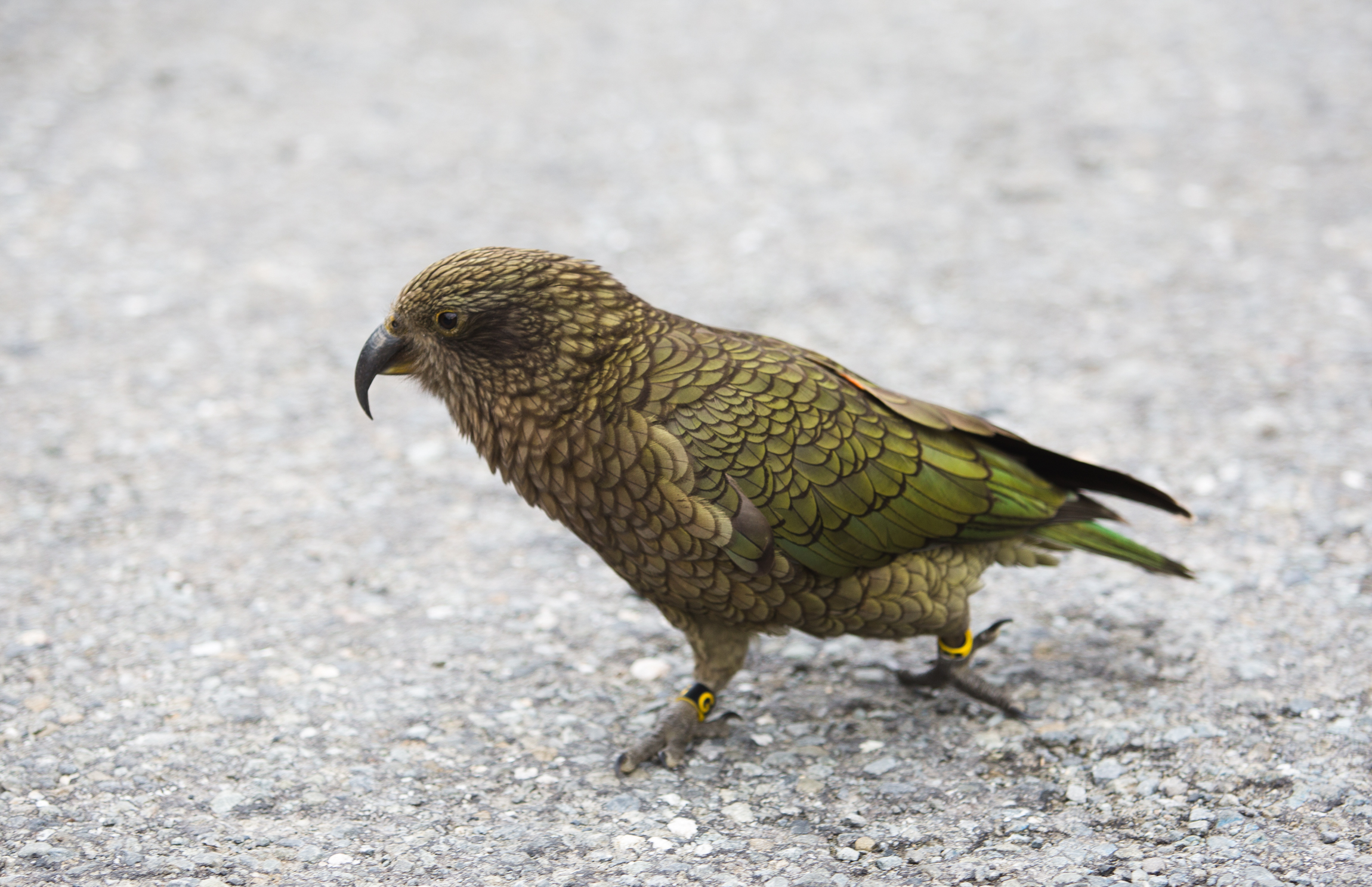New Zealand-0768.jpg