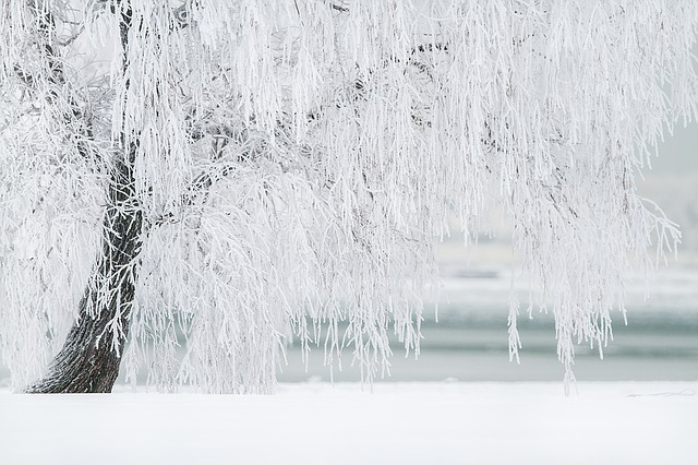 snowyfield.jpg