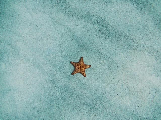 starfish-2203689_640.jpg