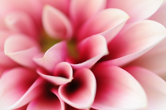 flower-3161792_640.jpg