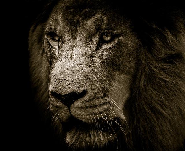 lion-3007701_640.jpg