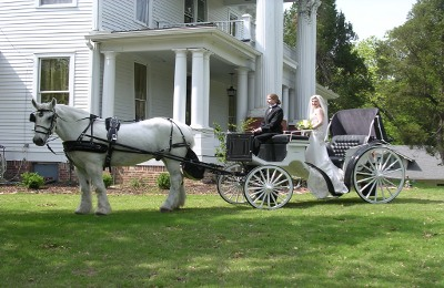 Our exclusive Victorian Wedding Carriage is a timeless, traditional carriage designed especially for bride and groom. This sharp white and black carriage is the perfect vehicle for stunning photos and lifelong memories.