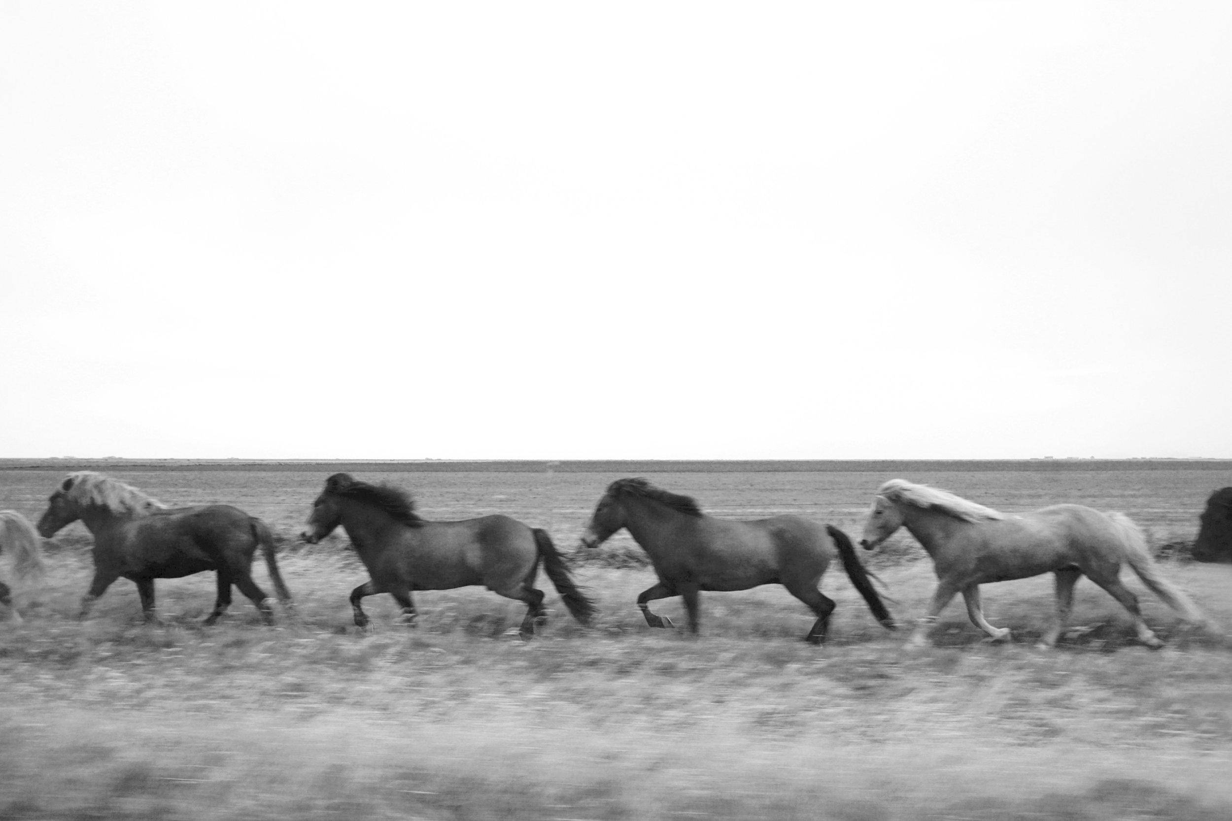 Four Horses.jpg