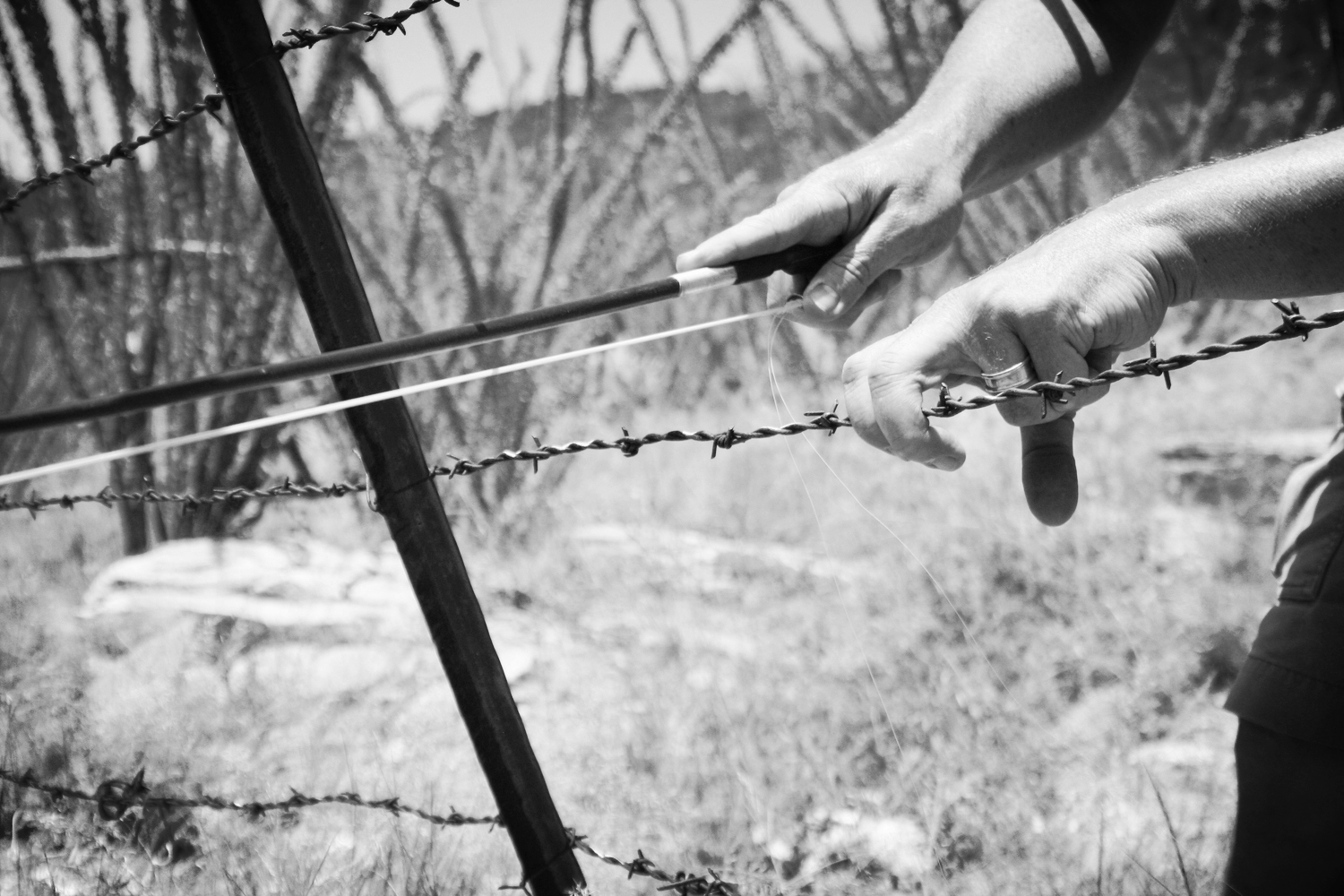 The Anta Project - Nogales-Sasabe Border - barbed wire, 2010