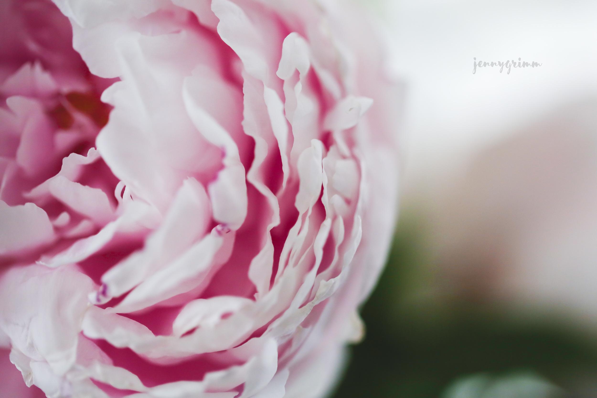 peony petal layers