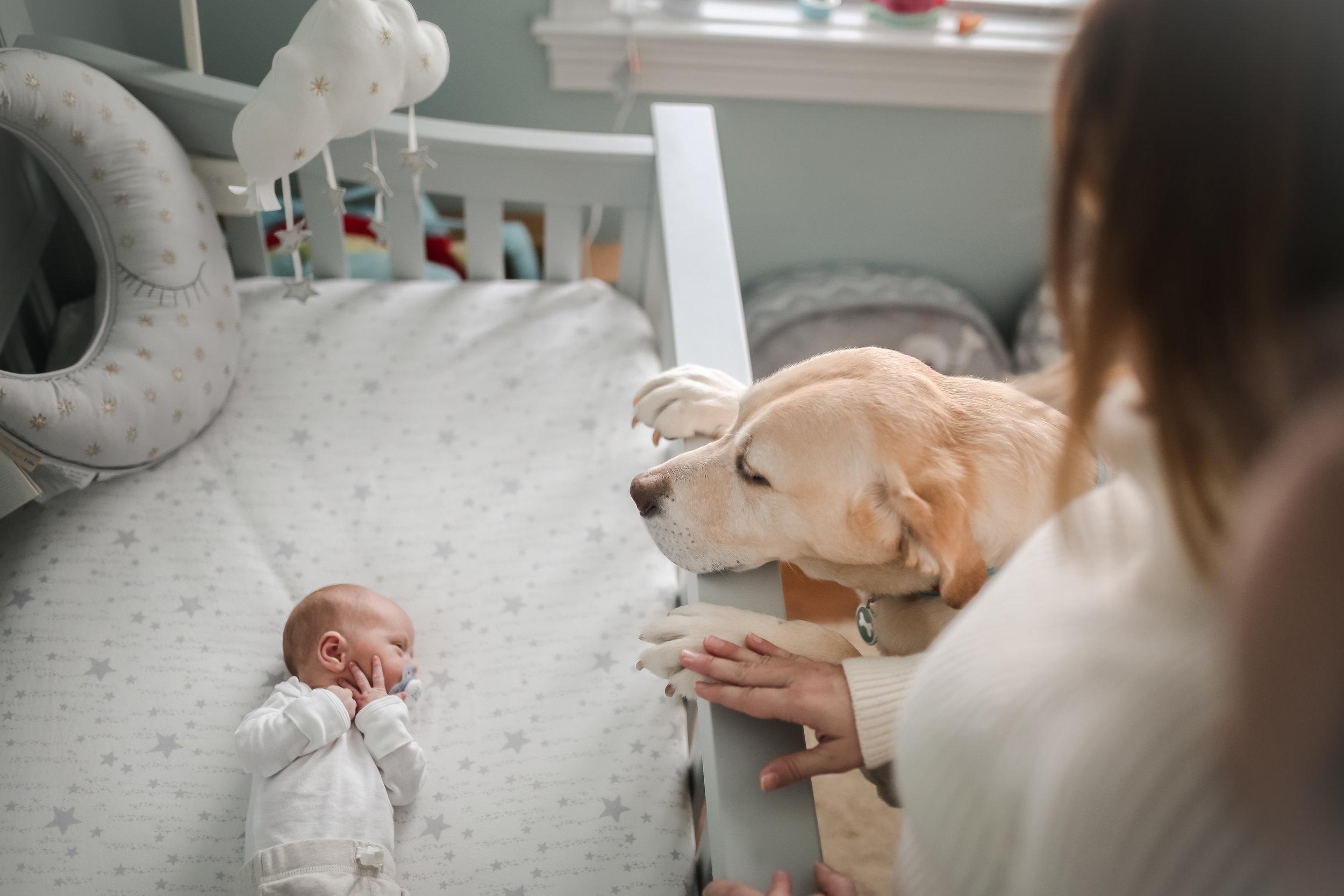 chicago lifestyle newborn photographer baby and dog