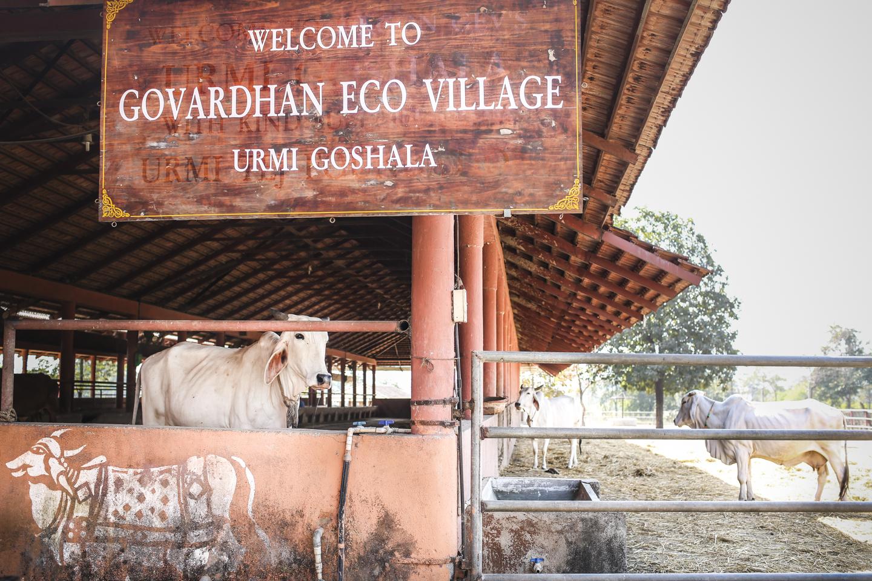 Bhakti_Retreat_EcoVillage_0018.jpg