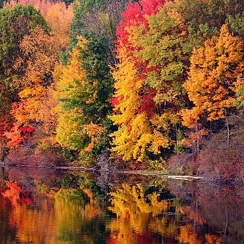 Who's excited for the fall foliage this year? Post a favorite fall picture of yours in the comments below.  #fall #hudsonvalley #october #upstateny #chatham #yoga